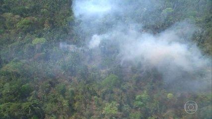 Sustentabilidade: Nossa Amazônia perdeu 8 por cento do seu território em 18 anos