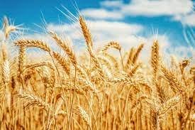 Antes do Agro, Brasil era grande importador de alimentos? Pera lá que não é bem assim